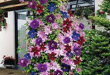 climbing flowers