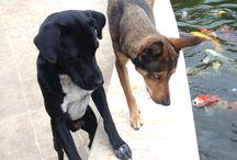 Mascotas. Amo los perros.❤️❤️❤️