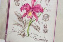 Haft Krzyżykowy - Orchidee