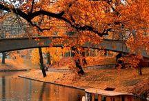 Vackra naturmiljöer