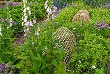 potager/cutting garden