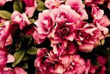 《 Flowers 《