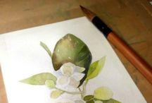 drawings / Jasmine