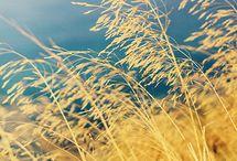 Wheat and Barley Fields