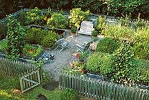 Vegetable Garden Ideas and Orchard / by The Purple Painted Lady ~ Tricia Kuntz
