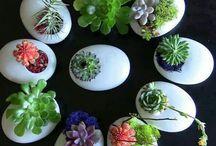 Succulents♡♡♡