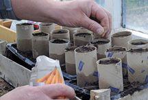 Сад огород растения / Сажаем, собираем урожай