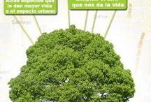 Árboles / Fotografías, hojas, frutos, raices...