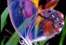 farfalle animali