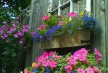 garden / by Jeri Lynn Wristen
