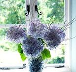 Flowers / by Azul Valente