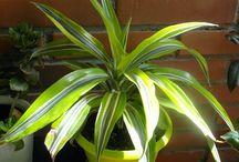 Plantas / Descripción y cuidado de plantas