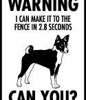 Basenji Signs and Pictures / Warning and Caution Basenji Dog Signs https://www.signswithanattitude.com/basenji-signs.html