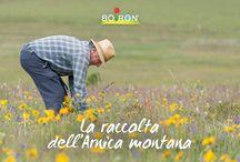 La raccolta dell'Arnica montana / Inizia la raccolta dell'Arnica montana sui monti della Francia. È un processo fondamentale che deve essere fatto da raccoglitori esperti per preservare la qualità della pianta e assicurare le sopravvivenza della specie. Scoprite di più in questa fotogallery.