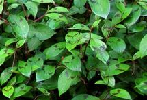 vaste planten met min of meer tropische/exotische uitstraling