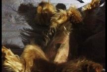 BEAR GRYLS / my dog Bear
