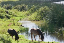 Lakes… and the Wild Horses on Easter Island
