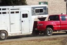 Horse - Show Season