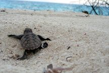 Caroline's trip / Follow the journey of Caroline turtle worldwide. Vote for the next destination and try to win a trip!