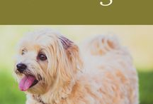 Pet-Friendly Calistoga / There are many pet-friendly wineries, hotels, parks and restaurants in Calistoga so bring your furry, four-legged friend to Wine Country with you!