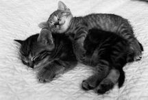 All about cute cat