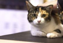 Our Blogs / Lone Tree Veterinary Medical Center Blogs
