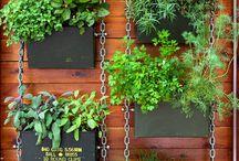 Herbs garden