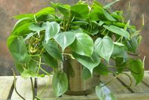 piante salute