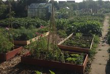 my allotment (when I've moved up the wait list!)