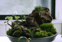 miniaturgarden