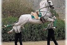Spanyol lovas