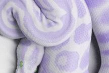 Beautyful snakes