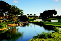 Golf in The Palm Beaches / If you want variety and challenge in your golf courses, then The Palm Beaches has got your game. Almost four dozen courses – from executive to championship and even mini-golf for future pros and their families – dot the county. Our courses have been designed by the best names in the industry, and have been known to test even the best Tour professionals. So bring your clubs or rent a set. Golf in The Palm Beaches is sure to challenge every aspect of your game. http://ow.ly/ip053  / by The Palm Beaches Florida