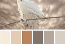 Kleur huiskamer
