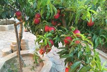 Agriculture / Fruits, veggies, agriculture, seeds