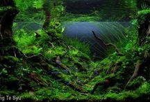 """Aquascapes """"Forests"""""""