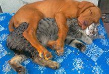 * #Tierfreundschaften ~ Friendship of Animals