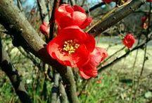 Garden: Asian origin / by Barely Poppins