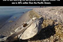 environmentally sad