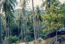 Thailand: Koh Tao