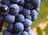Orígen cosmetics / Cosmética natural basada en la uva Bobal