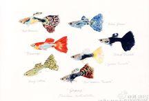 Fish paintings Nagashima Yusei