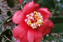 My winter flowers