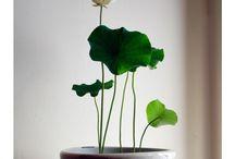vandplanter