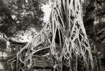 Tree,ağaç