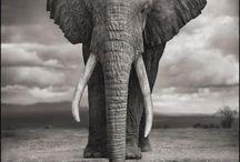 Nick Brandt - Amboseli National Park in Kenya