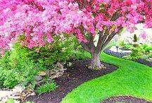 ΚΗΠΟΣ / Καλλιέργεια φυτών- ιδέες για διαμόρφωση κήπου