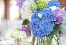 Flowers I love / by Marsha Engelhaupt