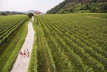 La Strada del Franciacorta fra i fondatori del Coordinamento Nazionale delle Strade del Vino, dell'Olio e dei Sapori