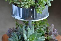 Mini Gardens / Gardening